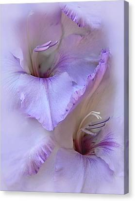 Dreams Of Purple Gladiola Flowers Canvas Print by Jennie Marie Schell