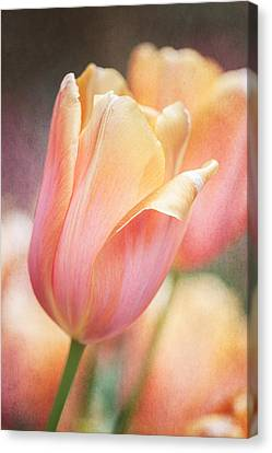 Dreamsicle Tulip Canvas Print