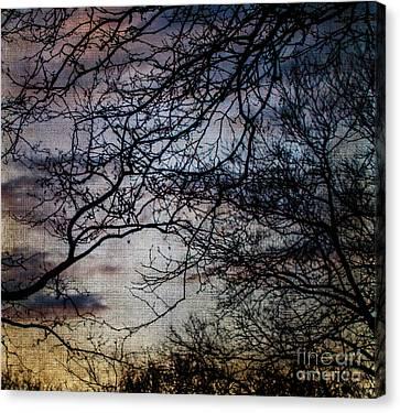 Dreamy 2 Canvas Print by Judy Wolinsky