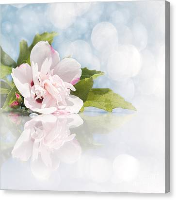 Dreamy Althea Canvas Print by Sari ONeal