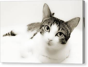 Dreamy Cat 2 Canvas Print by Andee Design