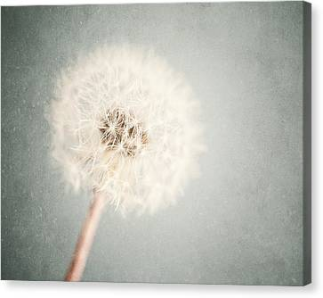 Dreamy Dandelion In Pastel Blue And Cream  Canvas Print by Lisa Russo
