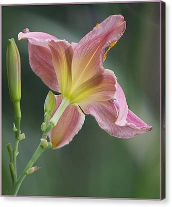 Canvas Print featuring the photograph Dreamy Daylily by Patti Deters