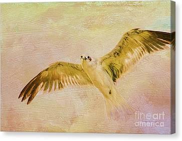 Dreamy Flight Canvas Print by Deborah Benoit
