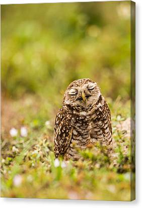 Dreamy Owl Canvas Print by Andres Leon