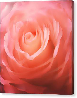 Dreamy Pink Rose Canvas Print