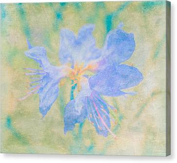 Dreamy Rhododendron Bloom Art Canvas Print