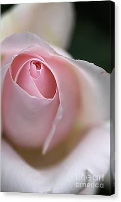 Canvas Print featuring the photograph Dreamy Rose by Joy Watson
