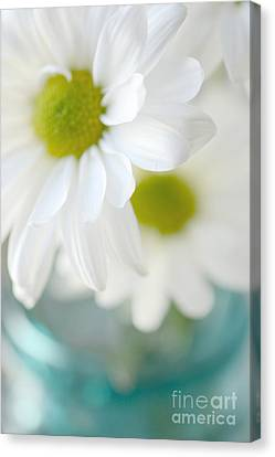 Dreamy White Daisies Aqua Mint Ball Jar Photography - Ethereal Dreamy Shabby Chic White Daisies  Canvas Print by Kathy Fornal