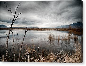 Dreary Canvas Print by Cat Connor