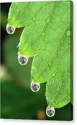 Drenched Canvas Print