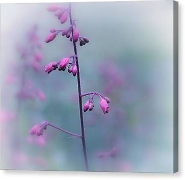Dressed In Pink Canvas Print