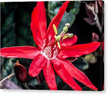 Dressed In Red Canvas Print by Photographic Art by Russel Ray Photos