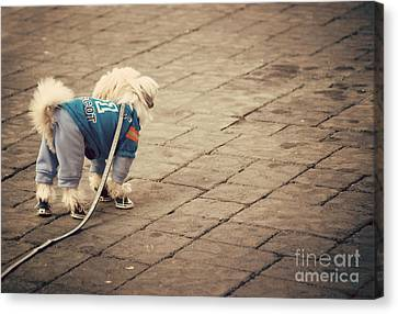 Dressed Up Dog Canvas Print by Juli Scalzi