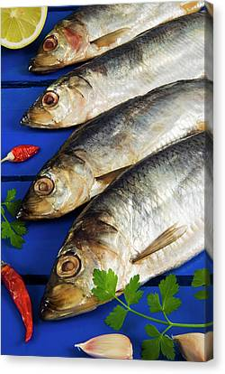 Dried And Smoked Atlantic Herring Canvas Print