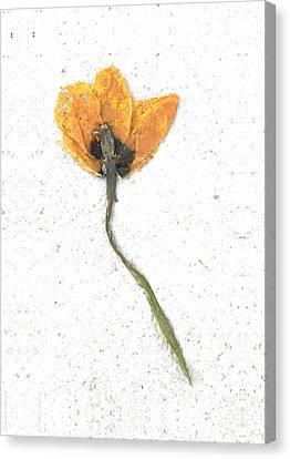 Dried Flower Canvas Print by Igor Baranov