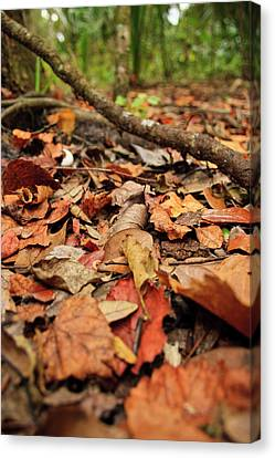 Dried Leaves On The Ground Canvas Print by � Marcela Montano - Vwpics