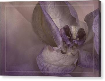 Dried Orchid Canvas Print by Cindy Rubin