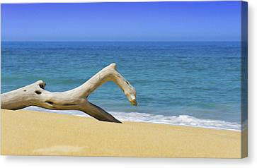 Driftwood Canvas Print by Aged Pixel