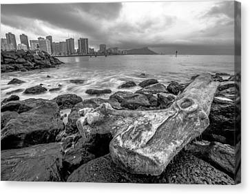 Canvas Print featuring the photograph Drift Wood by Robert  Aycock