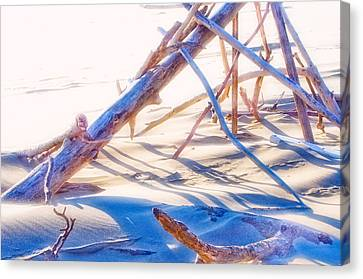 Canvas Print featuring the photograph Driftwood 1 by Adria Trail