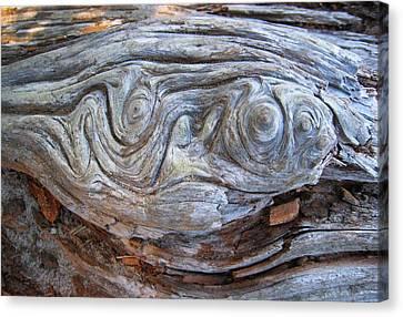 Driftwood 1 Canvas Print