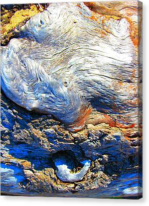 Driftwood 11 Canvas Print