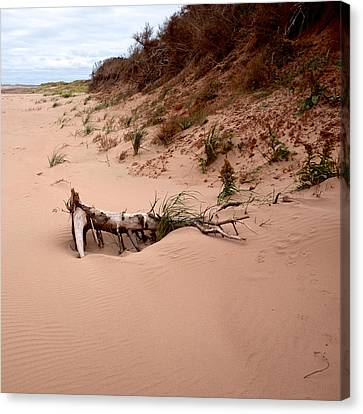 Canvas Print featuring the photograph Driftwood Along Dalvay Shore by Trever Miller