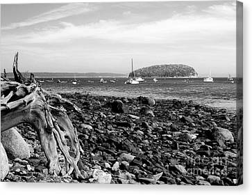 Canvas Print featuring the photograph Driftwood And Harbor by Jemmy Archer