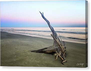 Driftwood At Dusk Canvas Print by Phill Doherty