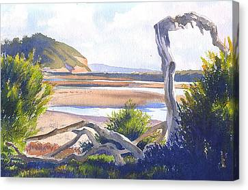 Driftwood Canvas Print - Driftwood At Torrey Pines by Mary Helmreich