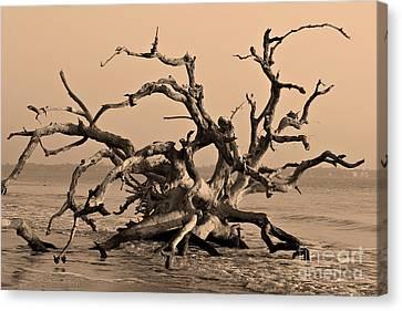 Driftwood Beach Jekyll Island Canvas Print