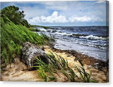 Driftwood By The Sea Canvas Print by Trudy Wilkerson