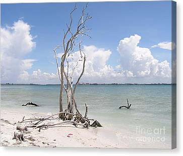 Canvas Print featuring the photograph Driftwood by Carol  Bradley