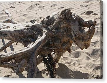 Canvas Print featuring the photograph Driftwood Creature I by Amanda Holmes Tzafrir