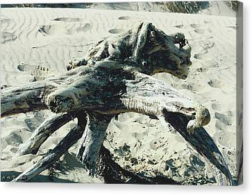 Canvas Print featuring the photograph Driftwood Creature II by Amanda Holmes Tzafrir