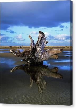 Driftwood Found Near Siltcoos Beach Canvas Print by Robert L. Potts