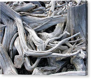 Driftwood Canvas Print by Gerry Bates