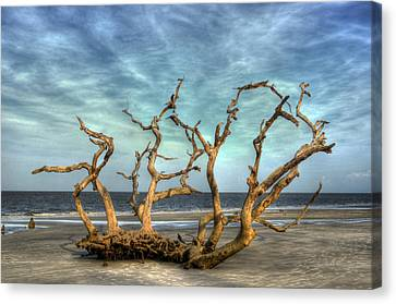 Driftwood Grove Canvas Print by Greg and Chrystal Mimbs