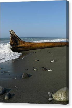 Driftwood Canvas Print by Jane Ford