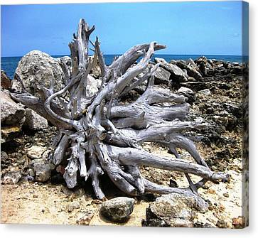 Canvas Print featuring the photograph Driftwood by Judy Palkimas