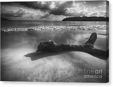 Driftwood On A  Beach Canvas Print by George Oze