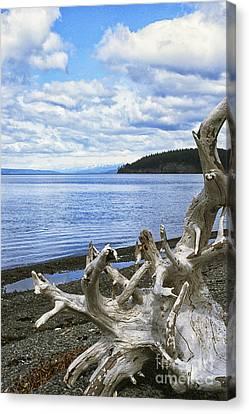Driftwood On Beach Canvas Print by Thomas R Fletcher