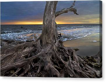 Driftwood On Jekyll Island Canvas Print by Debra and Dave Vanderlaan