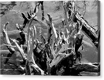 Driftwood On Lost Lake Canvas Print by Michelle Calkins