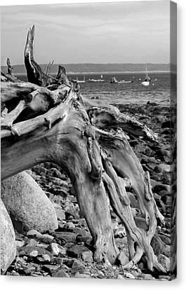 Canvas Print featuring the photograph Driftwood On Rocky Beach by Jemmy Archer