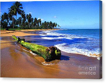 Driftwood Sea Palms Canvas Print by Thomas R Fletcher