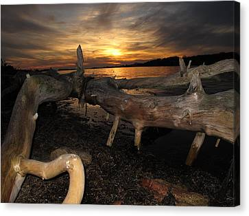 Driftwood Sunset Canvas Print by Donnie Freeman