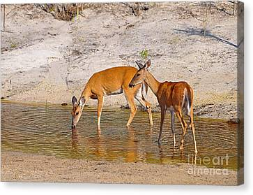 Drinking Does Canvas Print by Al Powell Photography USA