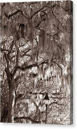 Dripping Feathers Canvas Print